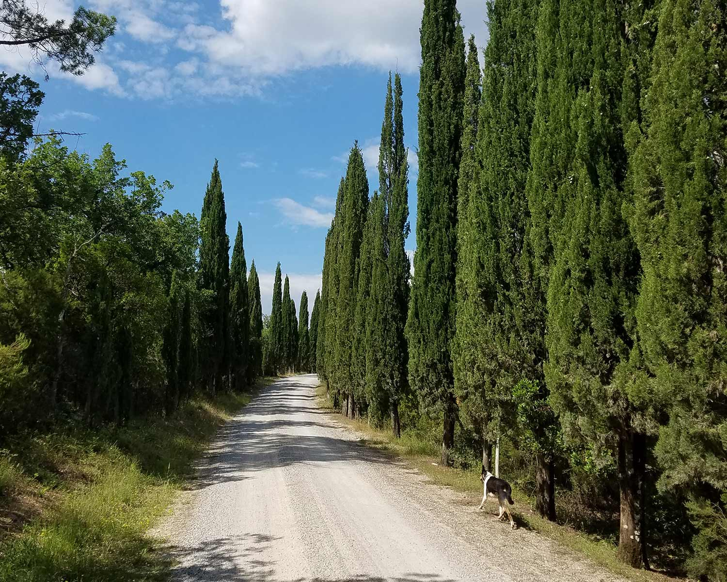 Tuscany Road in Chianti Hills near Siena